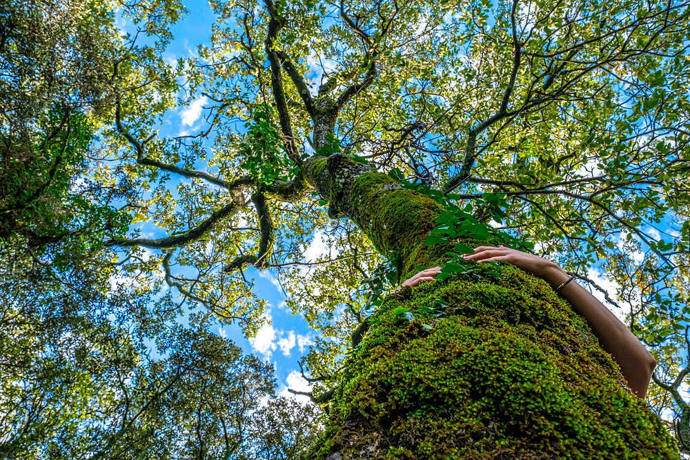 Forest bathing benefits