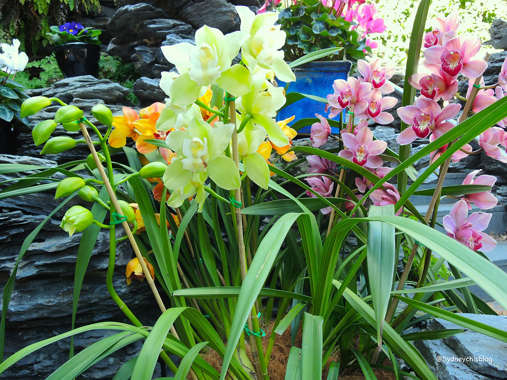 Orchids at the Chinese Garden of Friendship