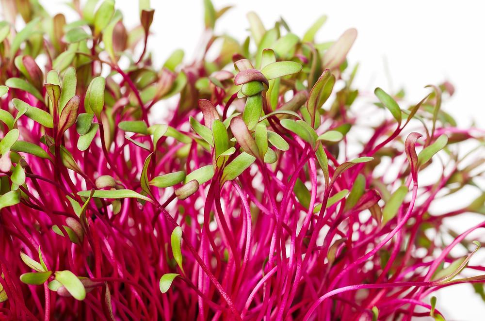 Microgreen health benefits