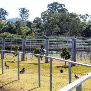 Jacaranda Estate a Boutique NSW Winery
