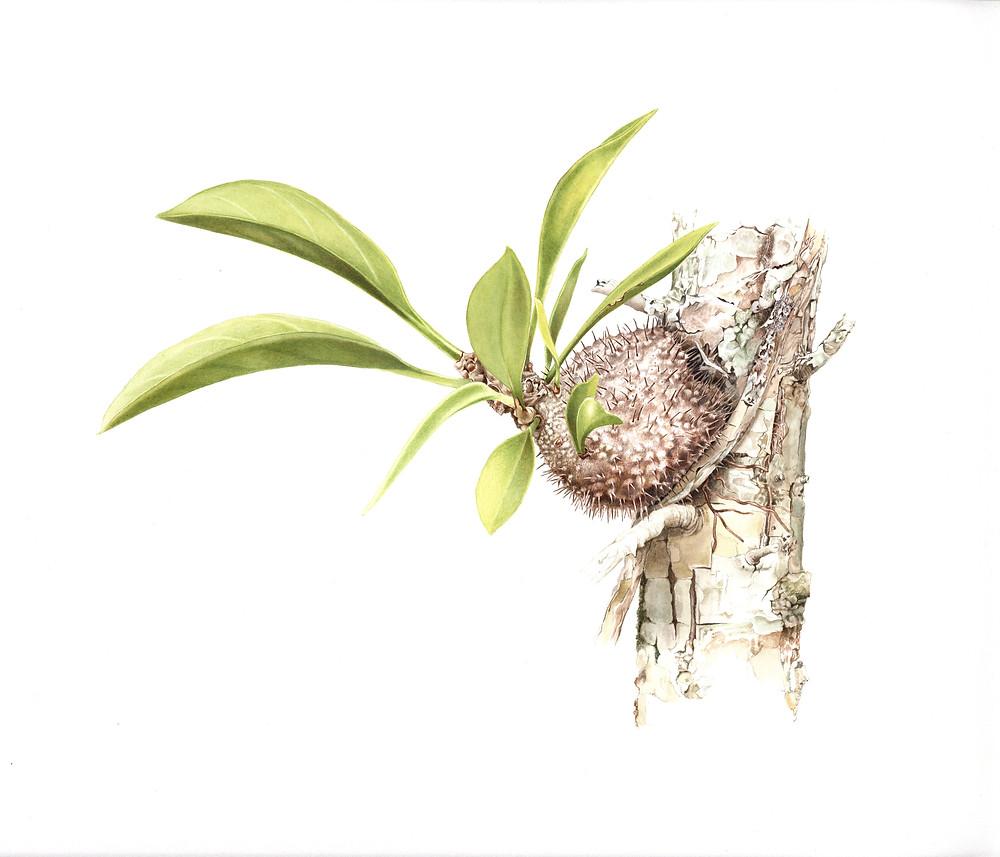 Spiny Any Plant by Deidre Bean