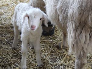Farm Stay Ewetopia Farm Wauchope