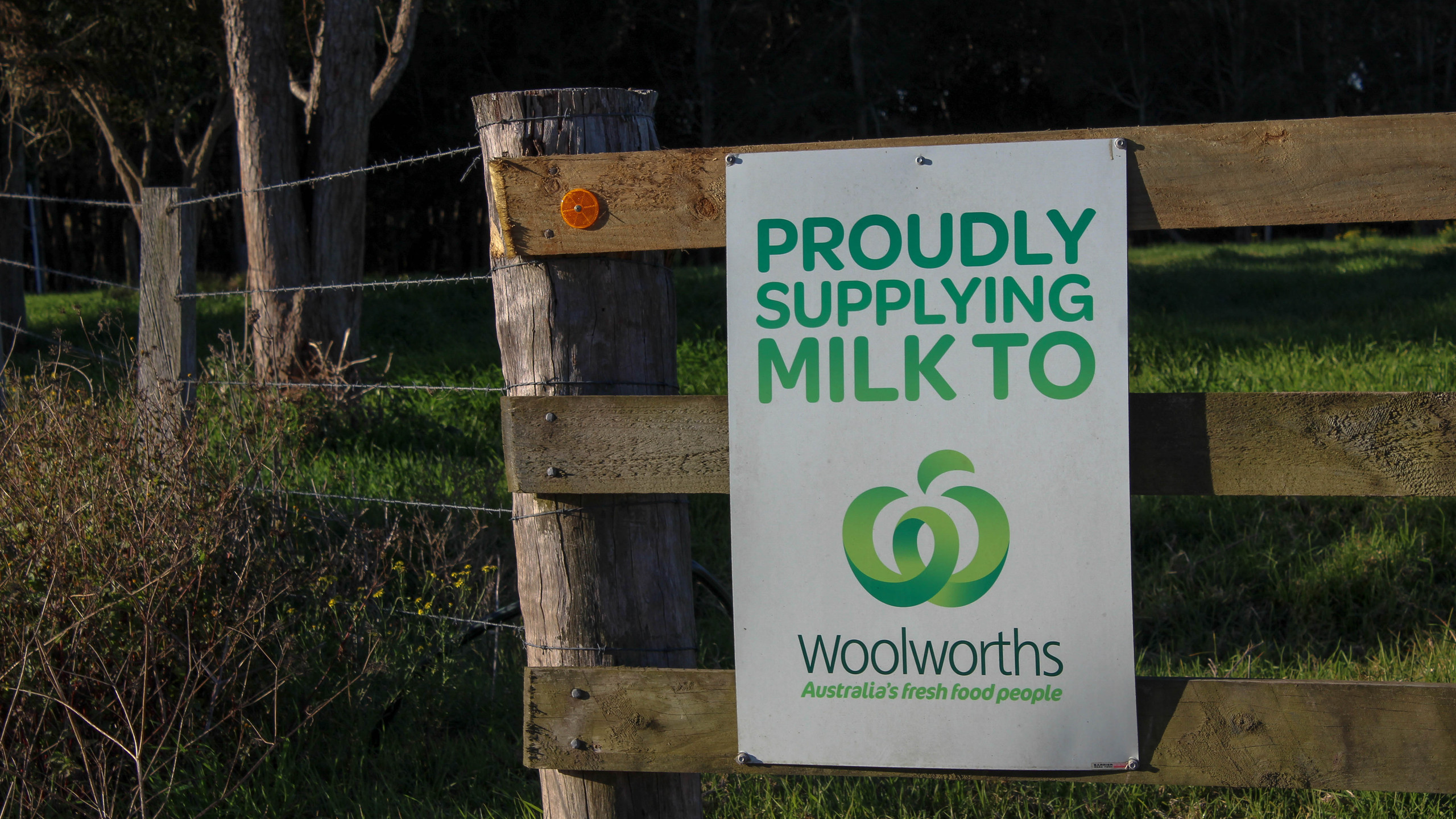 Supplying milk directly to Woolworths.