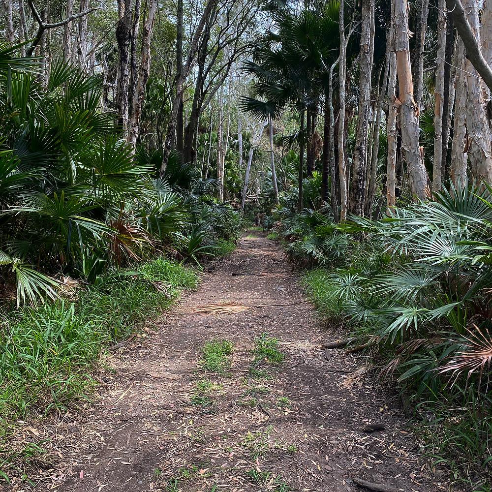 Mungo Brush Rainforest Walk