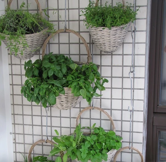 growing a vertical garden