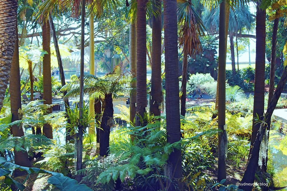 Royal Botanic Gardens Sydney