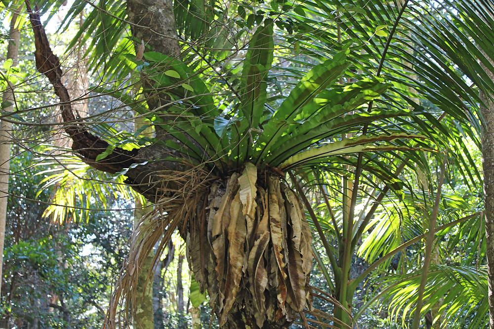 Fern growing on tree