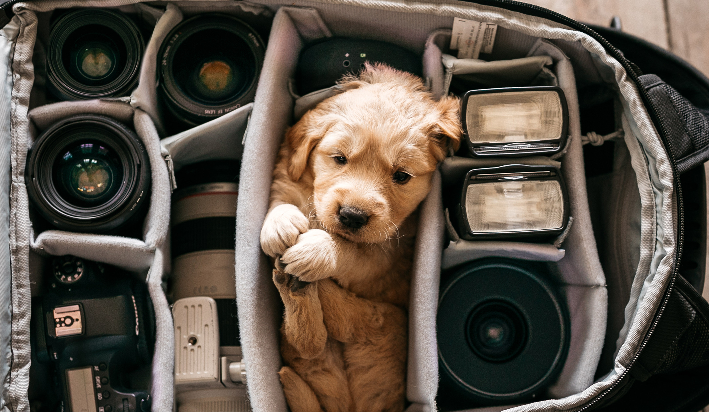 When I got my new puppy Moses, I knew I wanted to incorporate him into a picture with some camera gear. I have always enjoyed pictures of equipment organized neatly, so I thought it would be fun to place him in the midst of the gear while he was almost as small as a lens.   Shot on: Canon EOS 5D Mark IV and Canon EF 35mm f/1.4L II USM lens