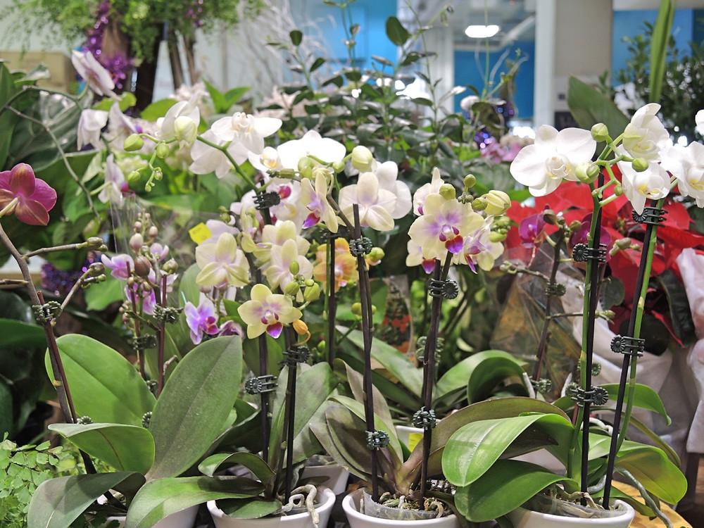 Harris Farm Markets Orchids