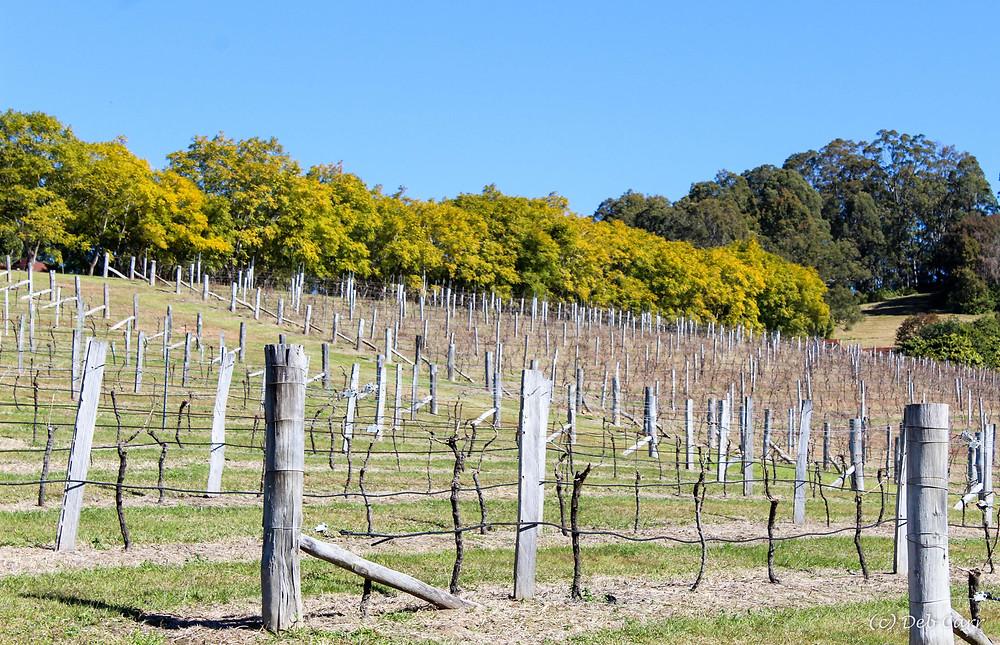 Wineries Manning Valley