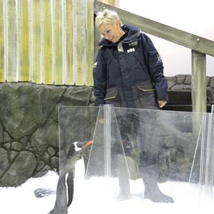 Penguin Passport: Up Close And Personal With Penguins At SEA LIFE Sydney Aquarium