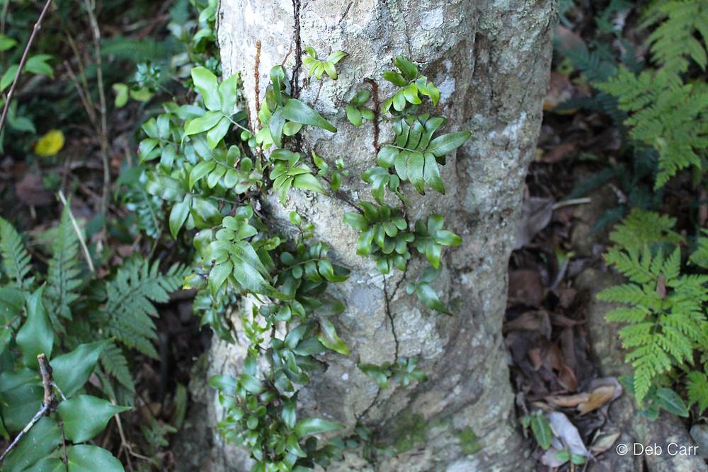 Rainforest NSW