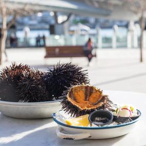 Sea Urchin Back on the Menu at love.fish