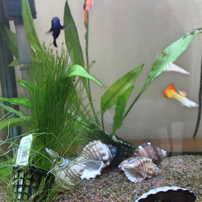 How to Start a Tropical Fish Tank