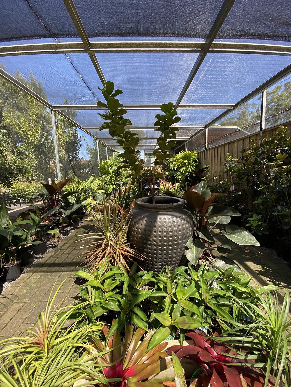 Garden Centres Tuncurry Forster