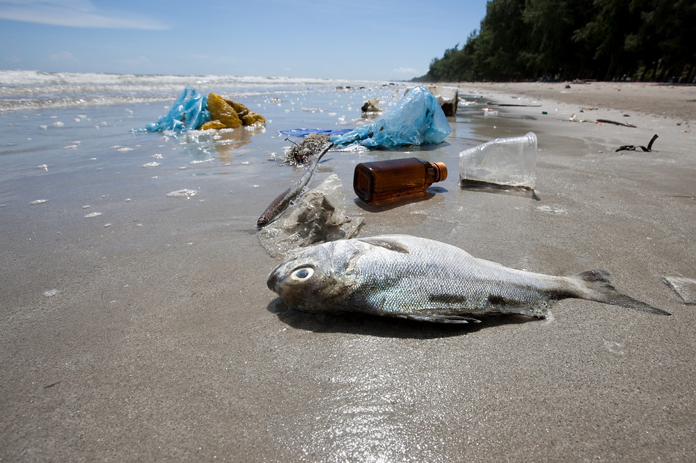 ABC War on Waste