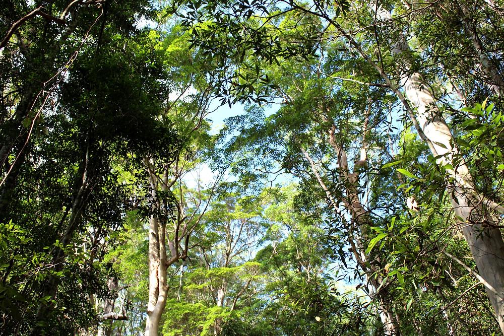 Rainforest Ellenborough Falls
