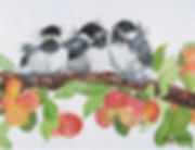 Chickadee Chicks.jpg