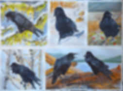Raven Montage for WAVE.jpg