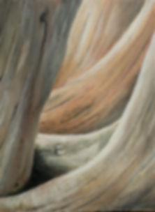 Driftwood Passage.JPG