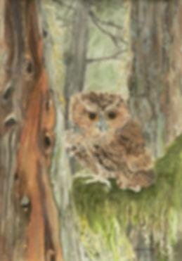 Forest Dweller1070775.JPG