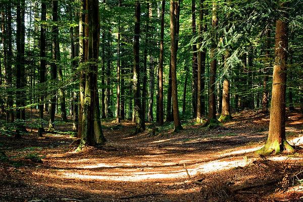 forest-972792_1920.jpg