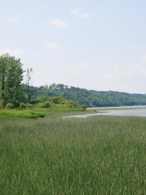 Marais riverain