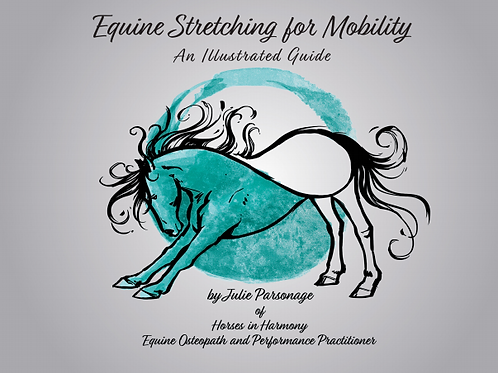 Equine Stretching for Mobility