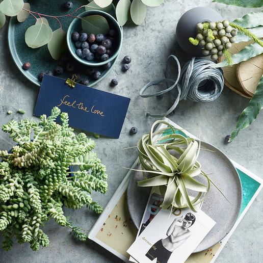 Urban Botanist | Succulent Trend | Burro's Tail & Air Plant | Still Life | Cool Tones