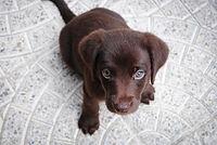 Neurology, Dog