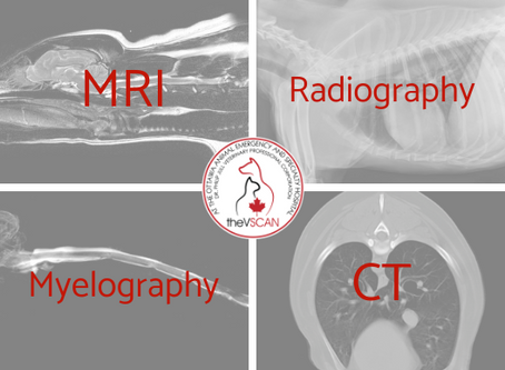 A Comparison of Imaging Modalities