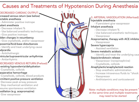 Hypotension During Anesthesia