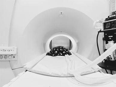 Veterinary, MRI, Imaging, Dog, Cat
