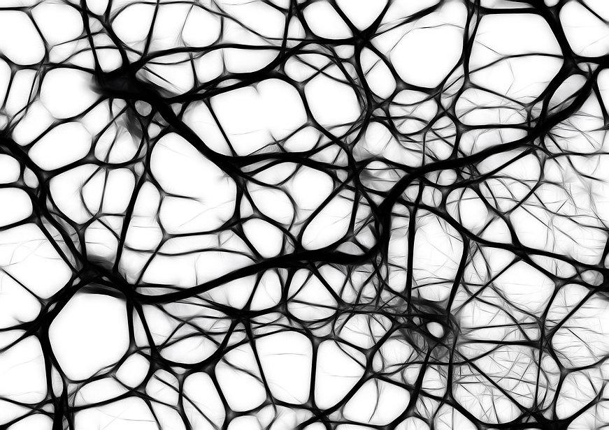 neurons-440660_1920.jpeg