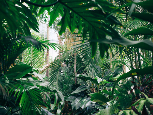 The Job Search Jungle: The Rough and Wild Side of the Job Search
