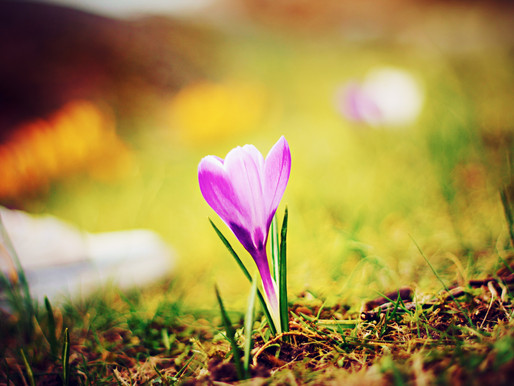 New Growth in Spring: Time for Professional Development