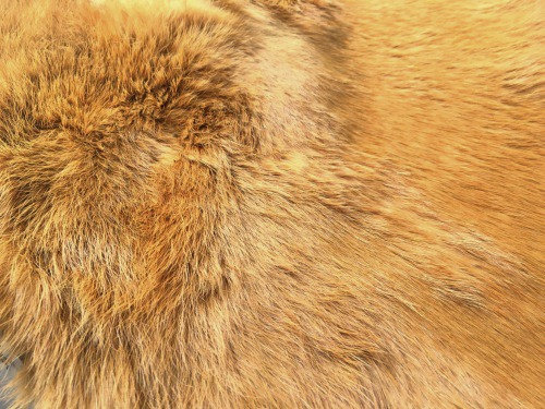 1x Golden Wheat Fur Pelt