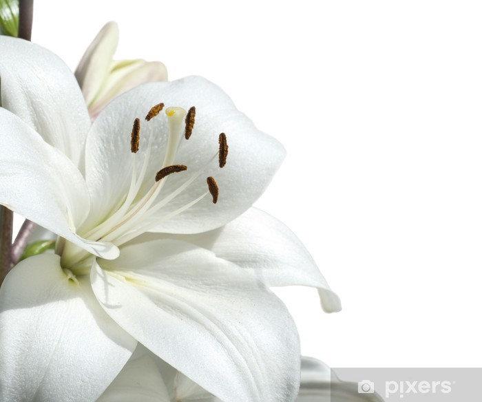 papiers-peints-lys-blanc.jpg.jpg
