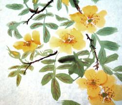 yellow roses.JPG