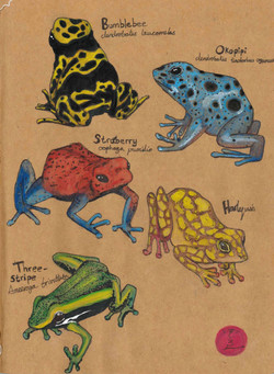 FrogsFinal.jpg