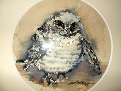 Owlet.JPG