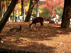 Autumn_in_Nara_by_r05km.jpg