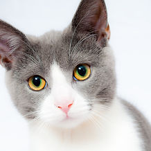 cat-1151519_1920.jpg