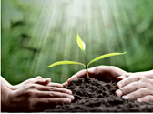 Plant growin, hands guiding the growth - Click - Links to WHUT Planned giving