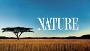 Nature PBS Logo on African safari background, - Click to watch NATURE on pbs video