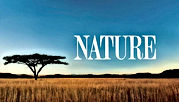 Nature PBS, African Plain - Clean Show logo - Click to watch
