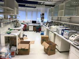 Old lab.jpg