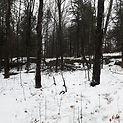 trees-winter.jpg
