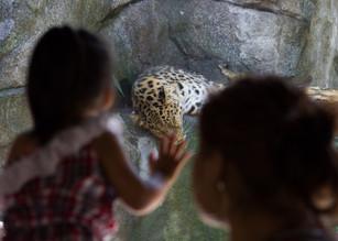 Minnesota Zoo / Megan Bethge