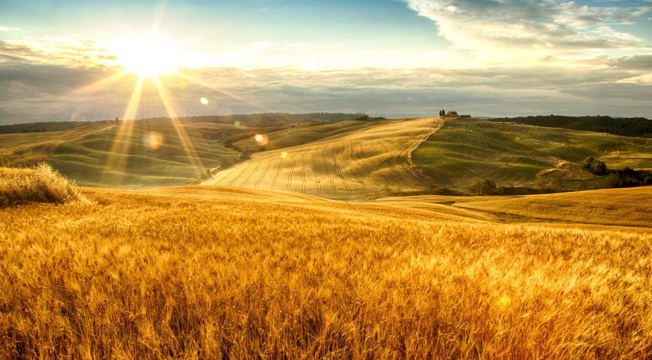 original_001-tuscan-fields-finedininglov
